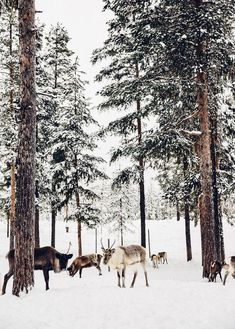 The Reindeer of Sweden. Pinterest // instagram @carriefiter summer outfits men summer nails summer recipes summer dinner recipes summer activities for kids summer party planning ideas summer style summer fashion instagram summertravel quotes travel tips travel tattoo travel hacks travel: places to go greece greece travel greece santorini greece vacation greece outfit fashion ootd style inspiration 90s fashion street wear street style photography style hipster vintage design landscape…
