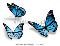 blue butterfly - Google Search