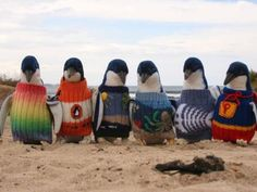 During an oil spill, many birds such as penguins can be impacted by the toxic mess. Alfred or Alfie Date, who is thought to be the oldest man in Australia, has been busy knitting sweaters for cute little penguins in the event of an oil spill. Funny Animals, Cute Animals, Animal Funnies, Phillips Island, Oil Spill, Faith In Humanity, Old Men, Pulls, Best Funny Pictures
