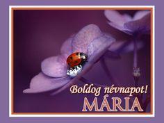 boldog névnapot mária Boldog névnapot, Melinda! | Névnaptár | Pinterest | Birthdays boldog névnapot mária