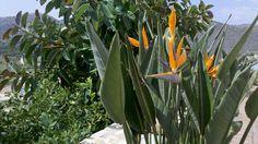 Gallery|Photos|Tholos Beach|Tholos Bay Suites|