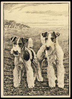 Wire Fox Terrier Original 1938 United Kingdom Unusual Card Free Insurance | eBay