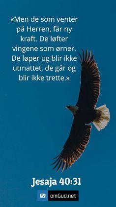 Bald Eagle, Bible Verses