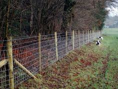 Image detail for -8mm wire fencing knitted wire fencing. this will probably be what we end up with to start...