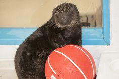 """You """"otter"""" fill out your March Madness bracket...   Yahoo News Photos"""
