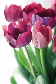 Tulips ༻♡༻¤ ღ รฬєєt รย๓ἶ ღ ¤ ༻♡༻ ღ☀ჱ ܓ ჱ ᴀ ρᴇᴀcᴇғυʟ ρᴀʀᴀᴅısᴇ ჱ ܓ ჱ¸. Pink Tulips, Tulips Flowers, Flowers Nature, My Flower, Daffodils, Spring Flowers, Beautiful Flowers, Simply Beautiful, Tulips Garden
