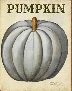 Fall Nesting, Free Vintage Pumpkin printable