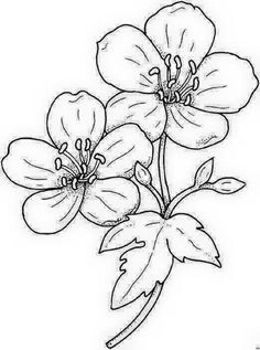 Flower Coloring Pages, Colouring Pages, Coloring Books, Floral Embroidery Patterns, Hand Embroidery Designs, Outline Drawings, Easy Drawings, Painting Patterns, Fabric Painting
