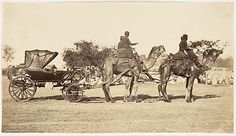 A Travelling Camel Carriage from Lahore to Peshawar, Governor General's Camp