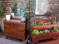 Old dresser turned into a lovely and fresh garden                                                                                                                                                                                 Mais