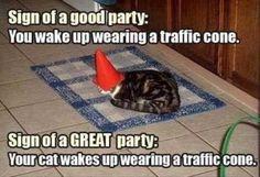 Trendy Katzen lustig lachen so hart Betten 60 Ideen - Cats! Funny Animal Memes, Animal Quotes, Funny Cats, Funny Animals, Cute Animals, Funny Memes, Funny Quotes, Cat Memes, Quotes Pics