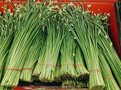 An introduction to Chinese greens, how they look like, how to store, how to prep and cook with them, and related recipes. Vegetable Base Recipe, Chinese Greens, Base Foods, Asparagus, Healthy Recipes, Vegetables, Cooking, Potatoes, Asian