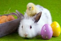 Image result for funny easter animals