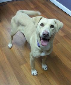 DAISY located in Lisbon, OH is running out of time. Adopt her now!