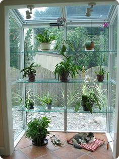 Here's the ultimate #GardenWindow - floor-to-ceiling, creating a mini-greenhouse right in your home.  We are a Minneapolis MN #ReplacementWindow company,.  http://www.replacementwindowsmpls.com