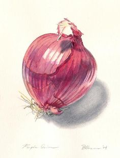 Purple Onion.....great shading: