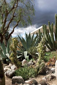 Among the garden's many succulents and cacti are Cereus peruvianus 'Monstrosus,' Agave americana, and C. peruvianus.
