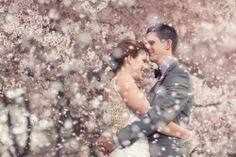 Wow! LOVE this gorgeous wedding photo amongst the cherry blossom! // By Perspectives Photography.