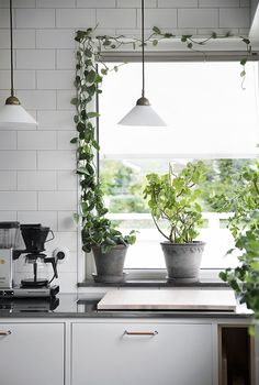 friendly house plants for indoor decoration 42 - New Deko Sites Home Interior, Kitchen Interior, Interior And Exterior, Kitchen Decor, Interior Design Plants, Kitchen Styling, Design Kitchen, Kitchen Plants, Deco Boheme