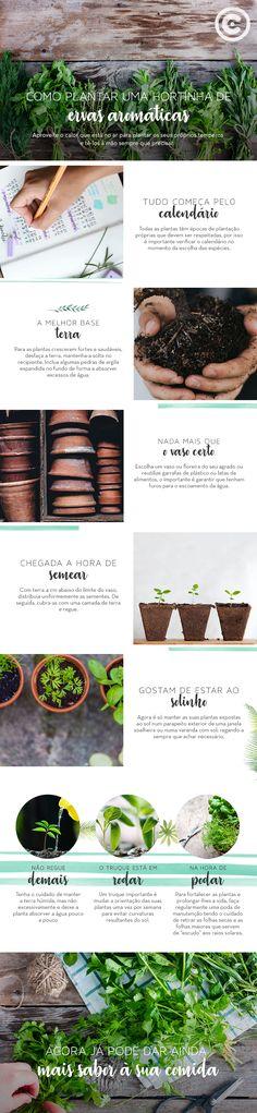 Como plantar uma hortinha de ervas aromáticas.