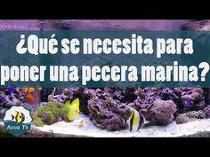 ¿Que se necesita para poner una pecera marina? - YouTube