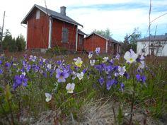 Sälgrundin luotsiasema, Kaskinen Finland
