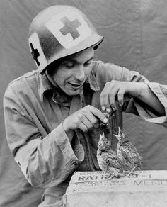A Medic of an unidentified unit takes some time out and feeds some birds resting on an upturned 10-in-1 Ration box. The GI wears HBT Coveralls, and has square medical markings on his M1 Helmet.