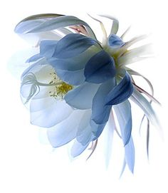 Delicate Divas:  The Floral Portraiture of Warwick Orme. A flower photographer after my own heart. WOW!