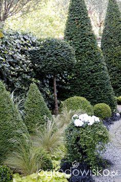 Ogród nie tylko bukszpanowy - część II - strona 679 - Forum ogrodnicze - Ogrodowisko
