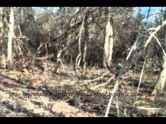 Bigfoot Clan Caught On Film In Ohio