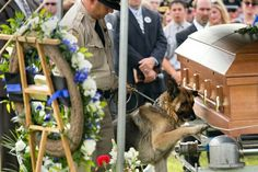 Figo, a Kentucky police dog, pays his last respects to his human partner, Officer Jason Ellis, who was killed in an ambush.