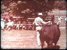 """""""Along America's Angus Trails"""" is a film that was produced in the late by the American Angus Association and narrated by Paul Harvey. Paul Harvey Quotes, Videos Funny, Westerns, Trail, Film, American, World, Farmer, Movies"""