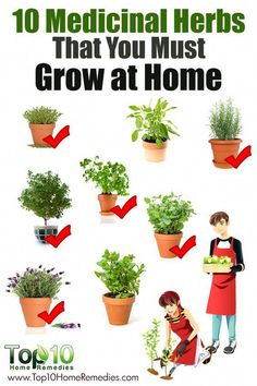 10 Medicinal Herbs You Can Grow At Home Top 10 Home Remedies is part of Planting herbs For ages, people have been cooking with different types of herbs to add unique flavor to dishes Studies now - Healing Herbs, Medicinal Plants, Growing Herbs, Growing Vegetables, Herb Garden, Garden Plants, Top 10 Home Remedies, Natural Remedies, Types Of Herbs