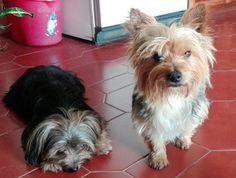 Bianca e Tinoco