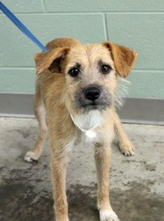 Scooter: Sweet terrier mix available July 27 at high-kill upstate shelter