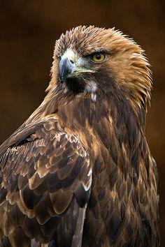 Falconry UK Thirsk 15/02/14 por Dave learns his Dig SLR? en Flickr