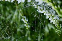 """Morning dew:  After considering some of God's creative works, Job exclaimed: """"Look! These are the fringes of his ways, and what a whisper of a matter has been heard of him! But of his mighty thunder who can show an understanding?"""" (Job 26:14; w09 5/1 jw.org)"""