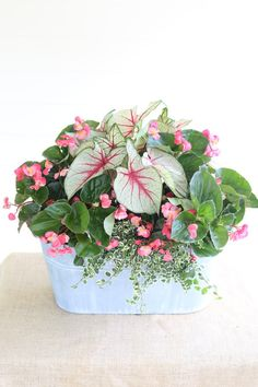 Calling all porches! This shade-loving mix includes: White Queen Caladiums Whopper Begonia Variegated Creeping Fig. Calling all porches! This shade-loving mix includes: White Queen Caladiums Whopper Begonia Variegated Creeping Fig. Diy Garden, Garden Planters, Shade Garden, Lawn And Garden, Garden Landscaping, Planter Pots, Landscaping Ideas, Porch Planter, Potted Garden