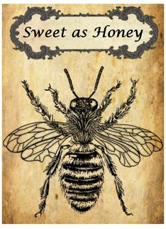 Greeting Card by Hope Thompson $3.00 http://www.greetingcarduniverse.com/collections/any-occasion-blank-note-cards/animals-pets/bees-wasps-hornets/bee-sweet-as-honey-vintage-789658?aid=151738  #bee #honey #greeting #card