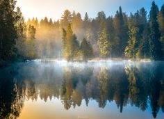 Forest Pond - Forest pond on a beautiful morning at Aulanko Nature reserve, Hämeenlinna, Finland.