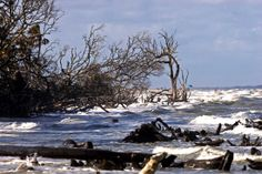 Hunting Island State Park, by Perry Baker c/o SC PRT.