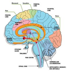 I am interested in being a neurologist. I believe in a few years i will be qualified to do so also.