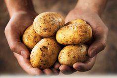 Ako vypestovať až 45 kg zemiakov na 1 m² | Pestovanie zemiakov 00