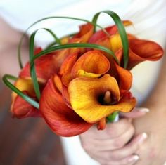 Orange calla lilies, aka my bouquet.