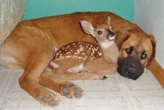 that's an awesome bodyguard, little fawn