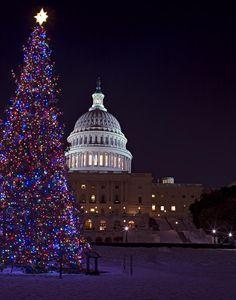 United States Capitol Christmas Tree