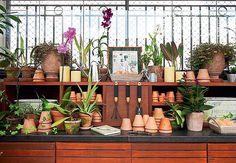 10 erros que você comete com as suas orquídeas