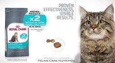 Gratis Zak Katteneten Bij Aveve !!!  Ontvang nu een gratis staaltje van 400 gram Royal Canin kattenvoeding bij Aveve. Schijf je in, ontvang een bon in je mailbox en ga met de bon naar een Aveve winkel. Actie geldig tot 4 juni of zolang de voorraad strekt Meer info ==> http://gratisprijzenwinnen.be/gratis-royal-canin-katteneten/  #gratis #katten #kattenvoeding #staaltjes