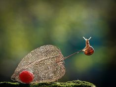 "Entry Title: "" A Magical World Of Snails"" Name: Vyacheslav Mishchenko, Ukraine Nature Animals, Animals And Pets, Cute Animals, Animal Original, Chinese Lanterns Plant, Tiny World, Little Critter, Mundo Animal, Amphibians"