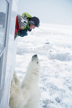 Getting up close and personal with the polar bears in Churchill, Manitoba, Canada.